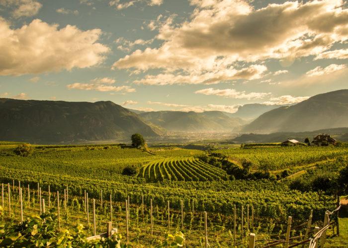 The Wine Collection: le novità firmate Hans Terzer