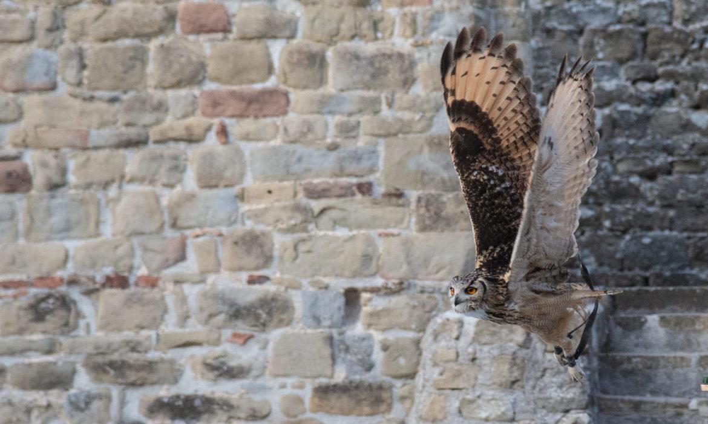 Al Castello di Petroia per una lezione di falconeria