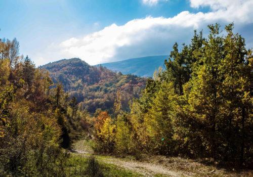 La magia del foliage: scopri i colori delle Marche