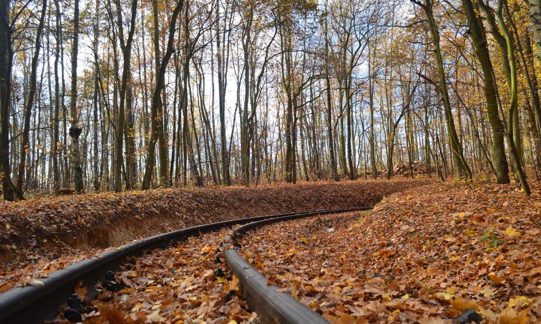 Treno del Foliage: per gli amanti del panorama autunnale