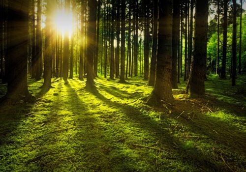 piantare un albero a distanza
