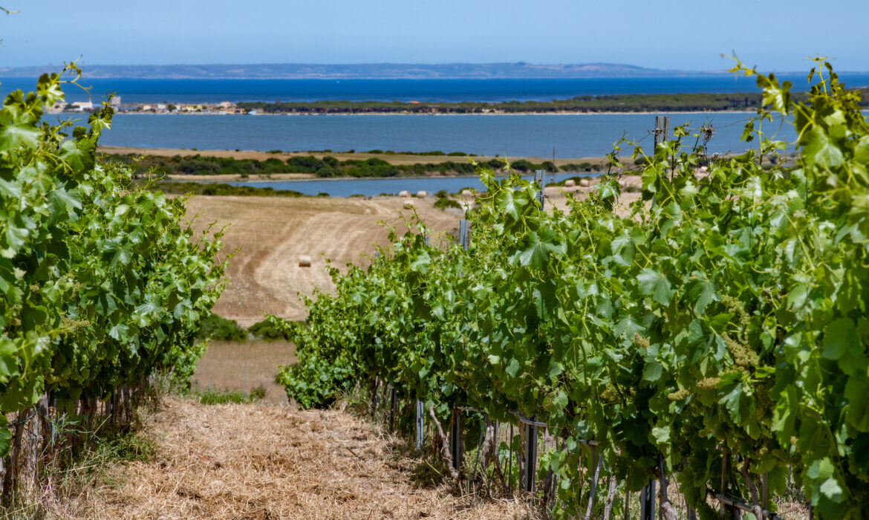 Atzei: il vino che nasce tra terra e mare