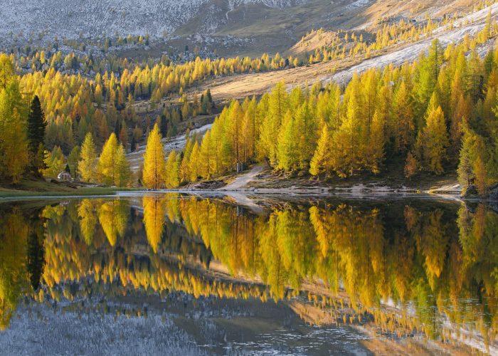 Le più belle foreste italiane immortalate in uno scatto