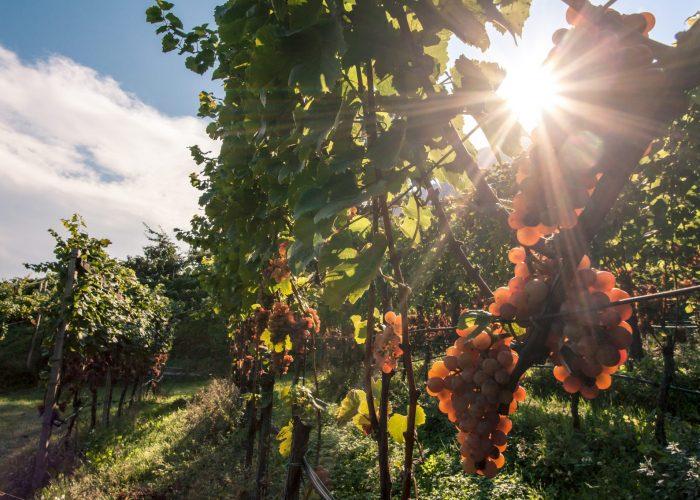 Quattro vini d'eccellenza che accompagnano verso l'autunno